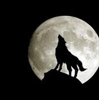 исповедь волчицы